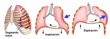 flail chest during respiration